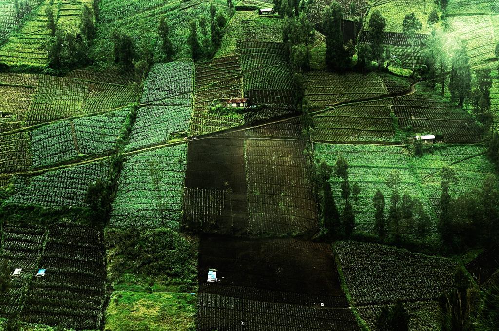 Farming Land Aerial_Evelina Kristanti